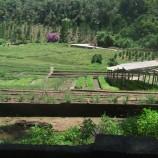 Série Brejal: Projeto Eco-Rural Caminhos do Brejal