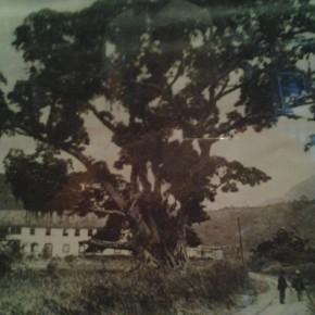 Trecho da Estrada de Ferro Leopoldina Railway passando ao lado da fazenda do Padre Correia, em 1918 (Foto: Museu Imperial / IPHAN / MinC)
