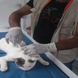 Município convida clínicas veterinárias para retomar parcerias para o programa de castração de animais domésticos