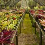 Exposição de Orquídeas, Bromélias e Bonsais do Horto Brejal é neste fim de semana