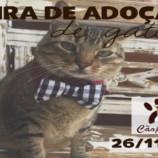 Feira de adoção de gatos acontece neste sábado