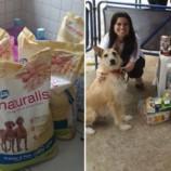 Natal Animal arrecada ração e outros produtos para animais abandonados