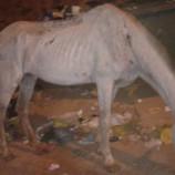 Órgãos trabalham juntos para resgatar cavalo no Atílio Marotti