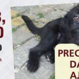 Proteção Cão Amor promove bazar beneficente em prol dos animais assistidos pelo grupo