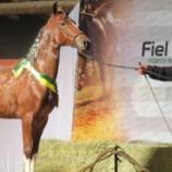 Feira de Artesanato e exposição Estadual do Cavalo Pampa também são atrações da Expo Petrópolis
