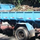 Município retira 16 toneladas de folhagem no entorno do Alcides Carneiro