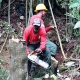 Equipe de biólogos da Secretaria de Meio Ambiente atendeu mais de 200 pedidos de poda de árvores desde o início do ano