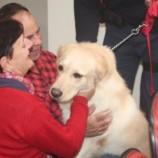 Cães da Guarda Civil são levados ao CTO para terapia dos pacientes