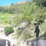 Mais de 20 toneladas de lixo verde removidos do Cemitério Municipal